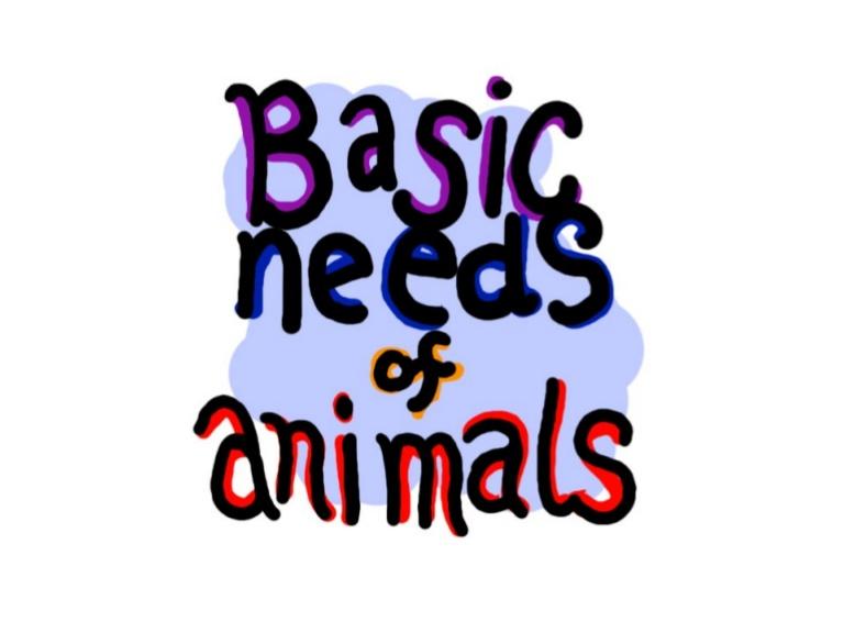 Animals Book.Ppt.