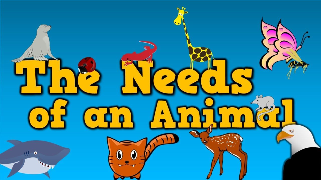 The Needs of an Animal (song for kids about 4 things animals.