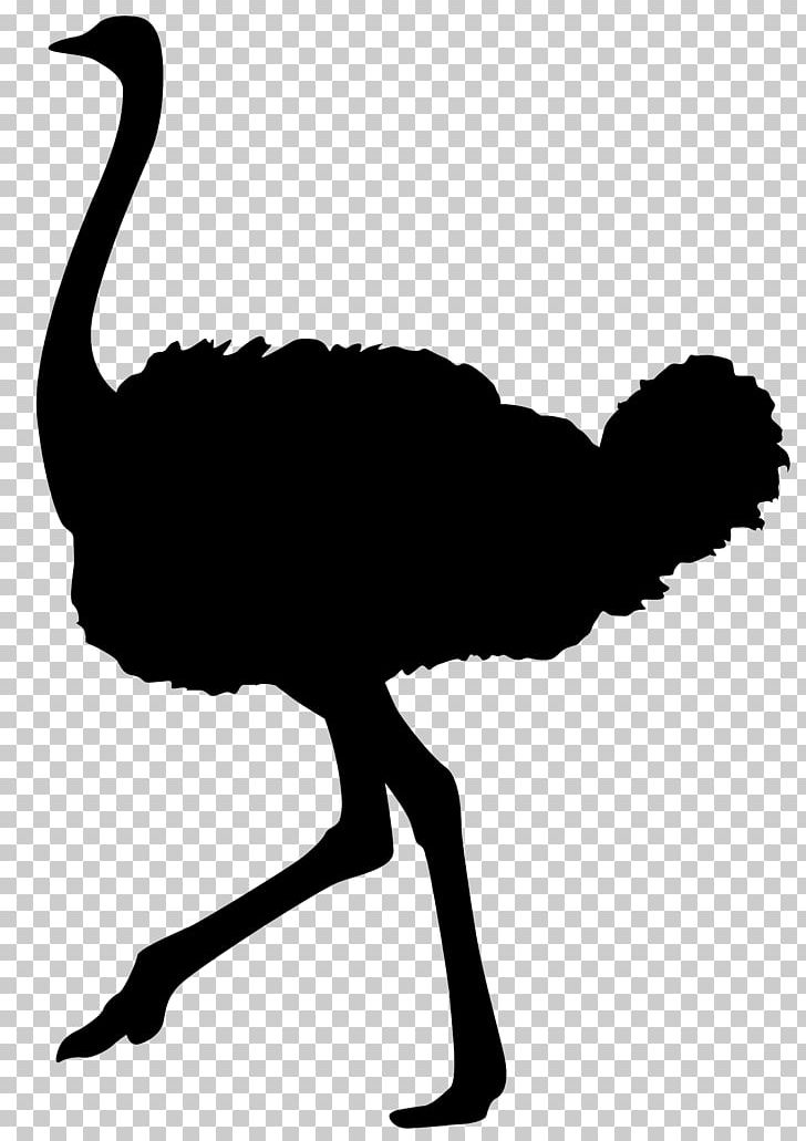 Common Ostrich Bird Silhouette PNG, Clipart, Animals, Animal.
