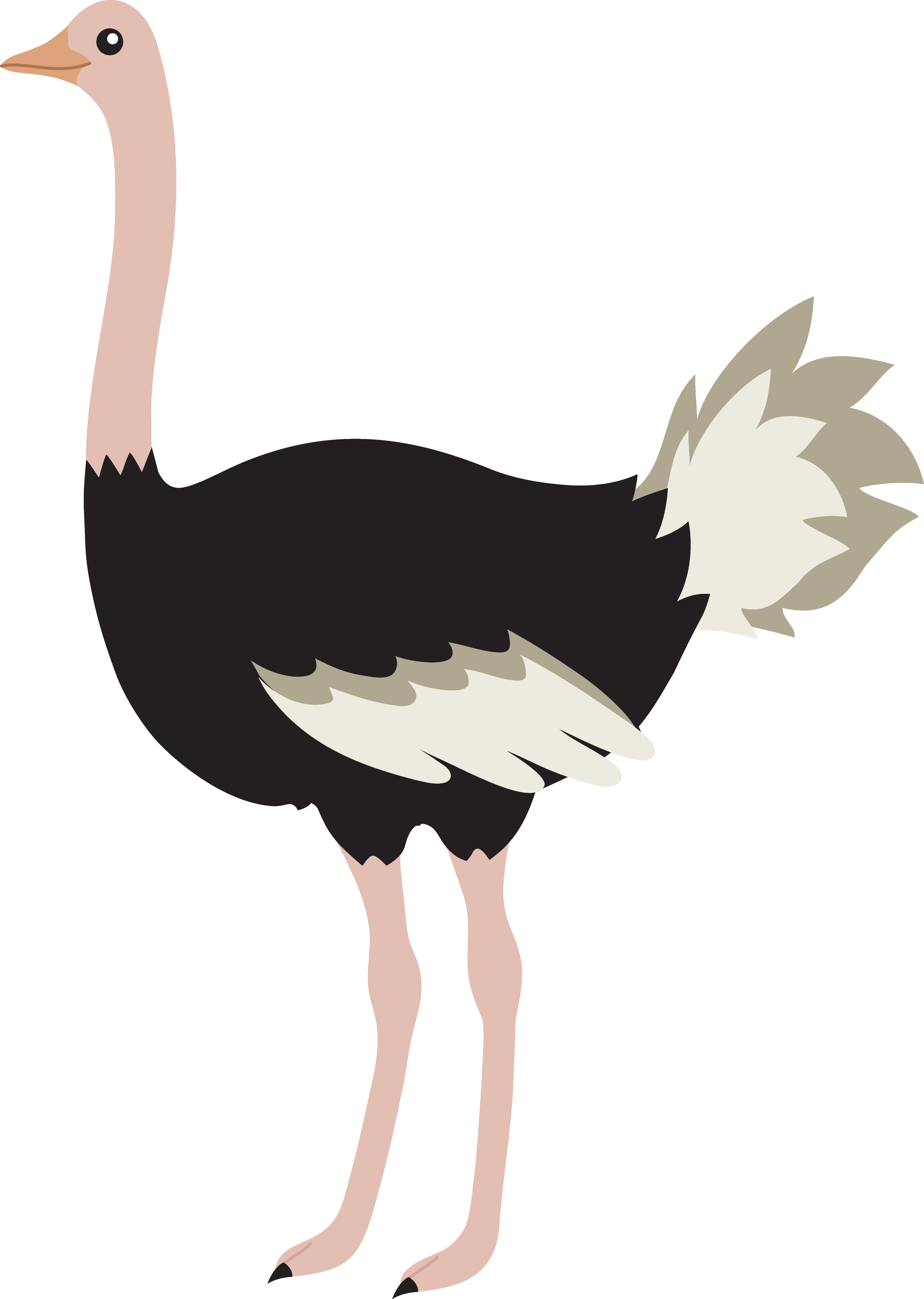 Cute Cartoon Ostrich Images & Pictures.