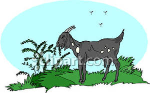 Animal eating plants clipart.