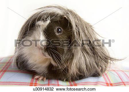 Stock Photo of tierportraits, pet, alfred, animal, animal portrait.