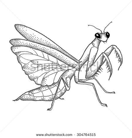 praying mantis clip art #35.