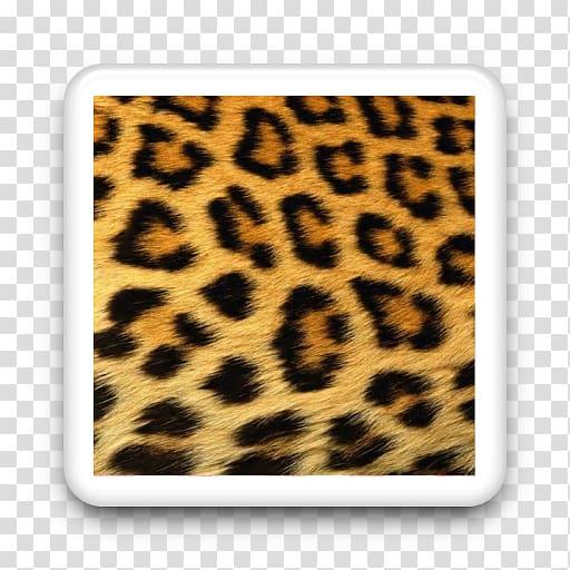 Cheetah Jaguar Animal print Tiger Ocelot, cheetah.