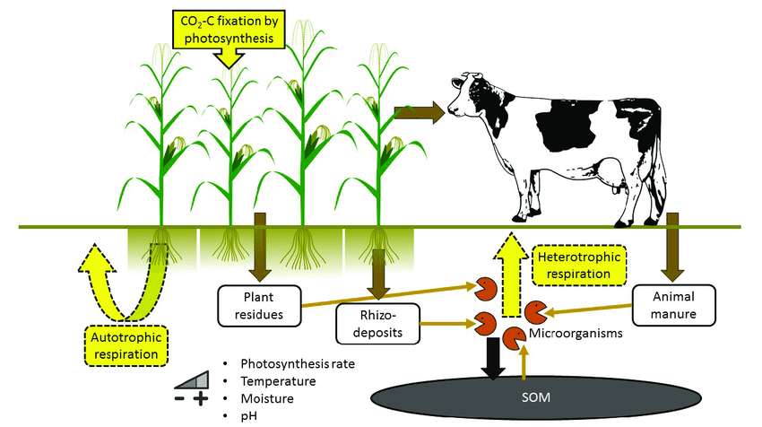 Constituents of soil respiration in an agricultural soil.