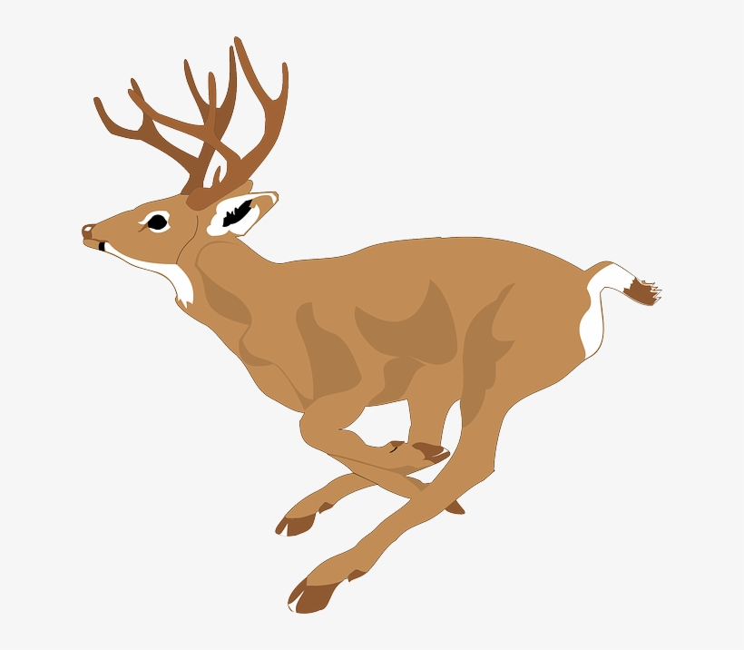 Deer, Run, Side, View, Forest, Leaping, Animal, Fast.