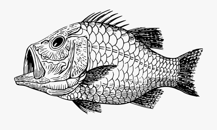 Ancient, Animal, Cretaceous, Extinct, Fish, Fossil.