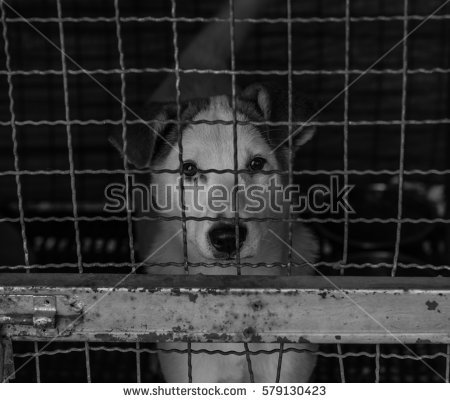Animal Shelter Stock Images, Royalty.