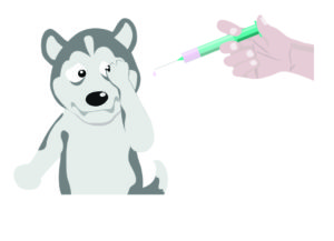 Vaccinations for Siberian Husky Puppies.