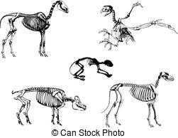 Animal skeleton Clipart Vector Graphics. 2,534 Animal skeleton EPS.