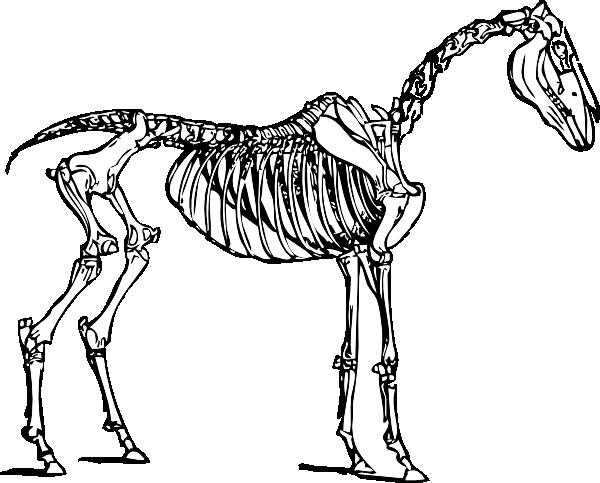 Animal Skeleton Clipart.
