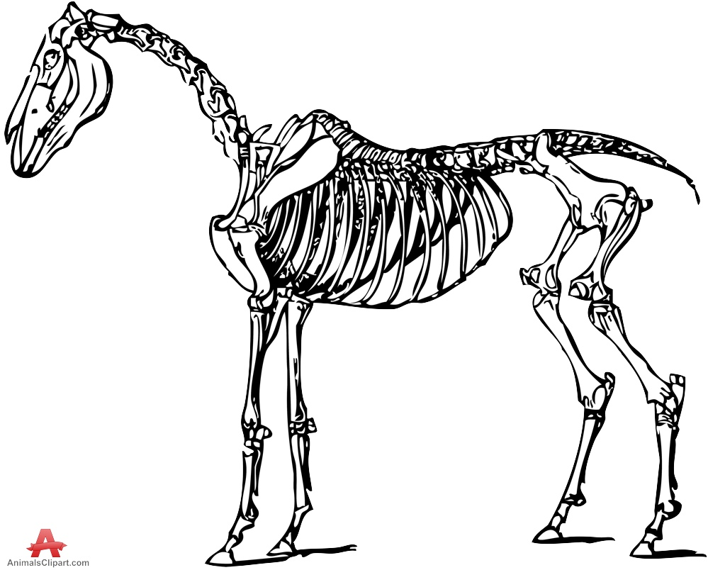 Horse Skeleton Clipart Drawing.