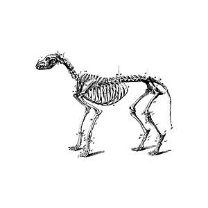 Free Dog Skeleton Cliparts, Download Free Clip Art, Free.