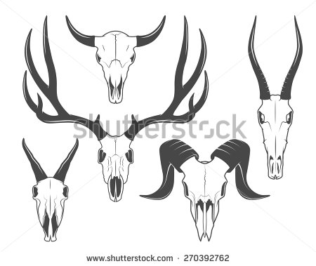 Animal skull profile clipart.