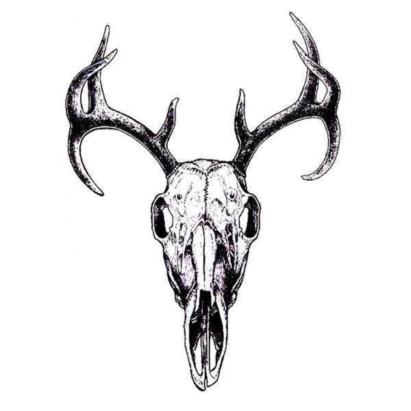 1000+ ideas about Deer Skull Drawing on Pinterest.