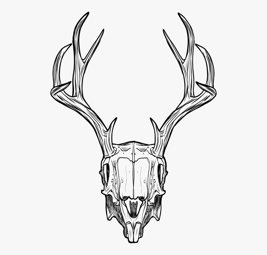 Jackalope Deer Animal Skulls Horn.