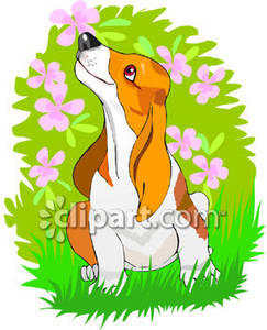 Hound Dog Sniffing Flowers.