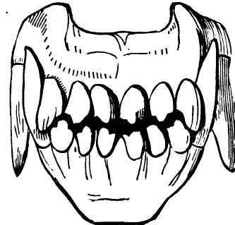 Free Dog Teeth Cliparts, Download Free Clip Art, Free Clip.