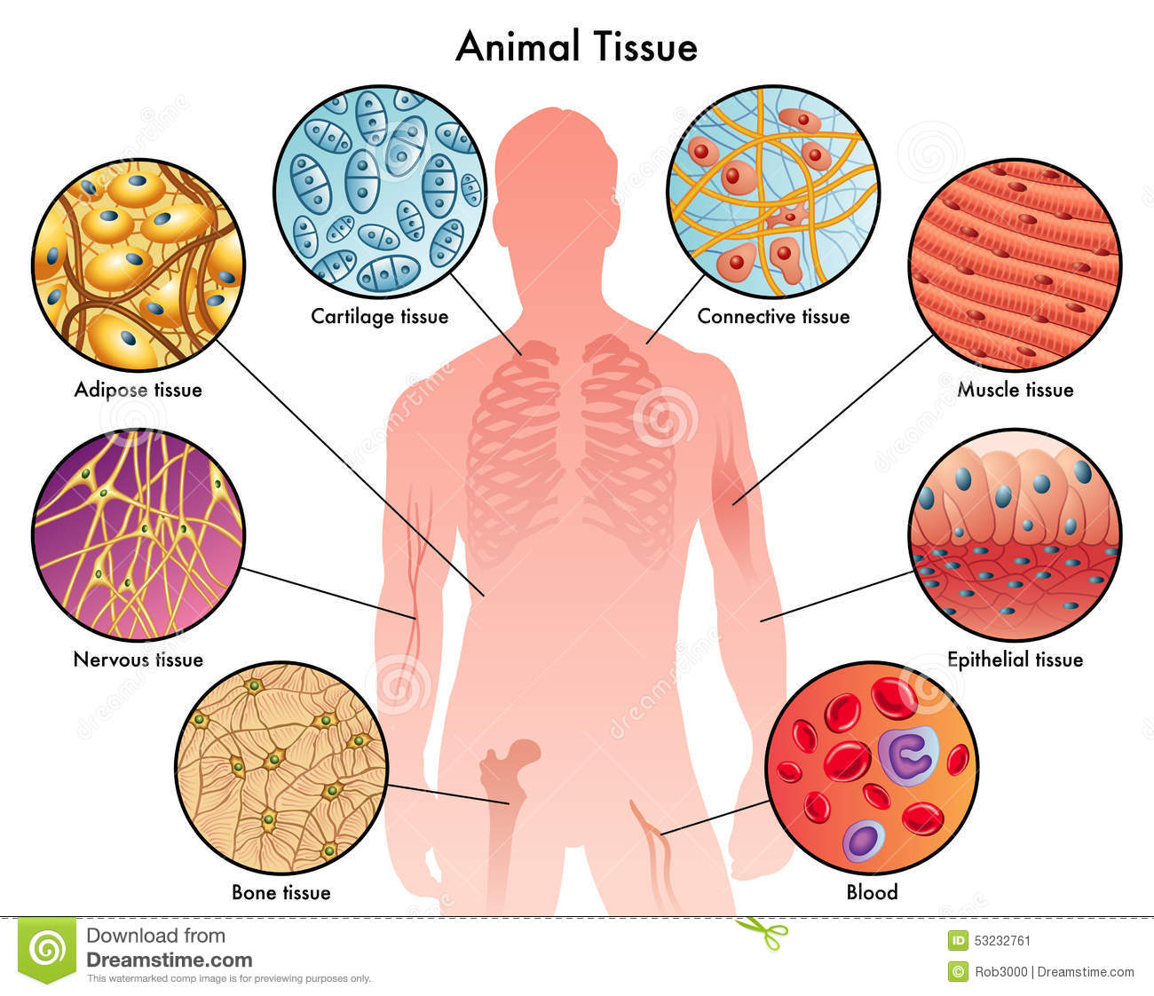 Animal Tissue Clipart.