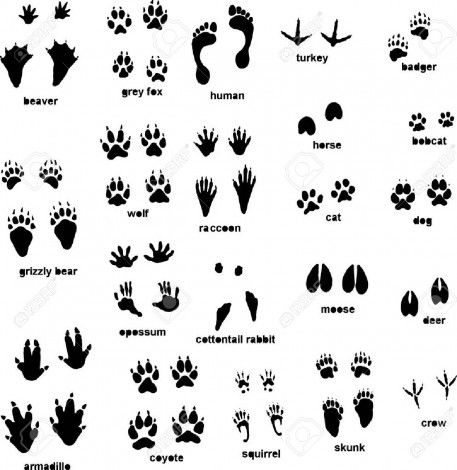 How to draw a footprint animal.