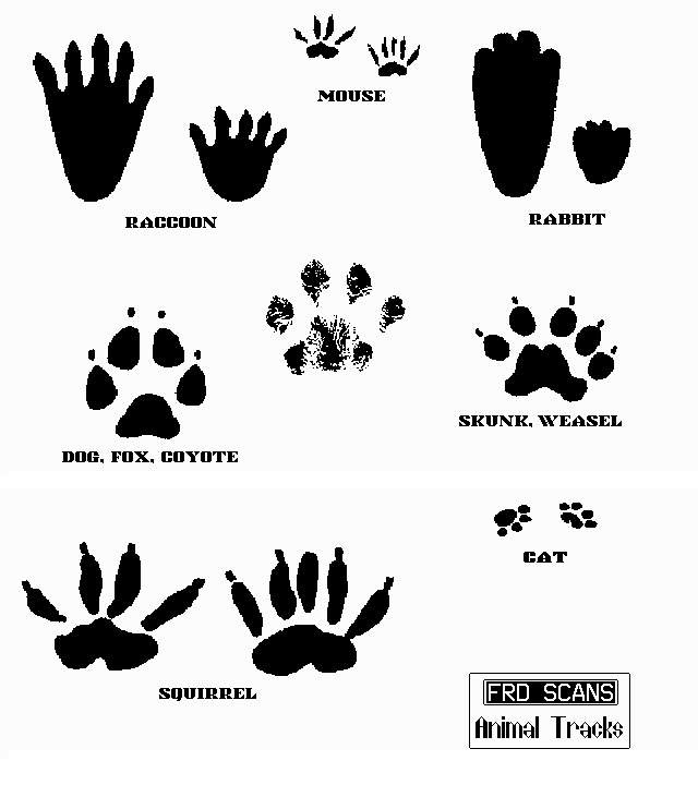Animal Tracks Clip Art free image.
