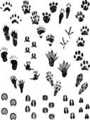 Animal Tracks Clip Art.