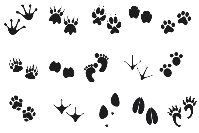 Clip art animal tracks.