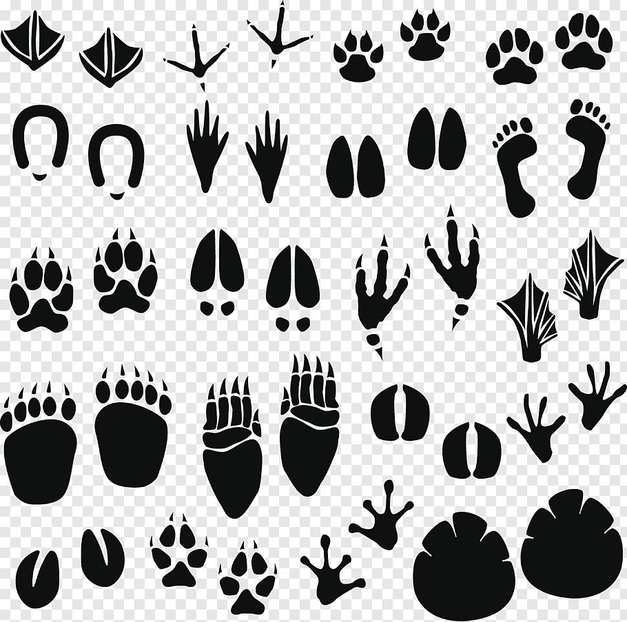 Animal foot print, Raccoon Footprint Animal track.