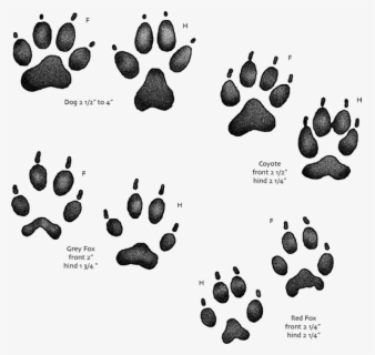Free Animal Tracks Clip Art with No Background.