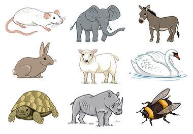 A variety of animal illustrations.