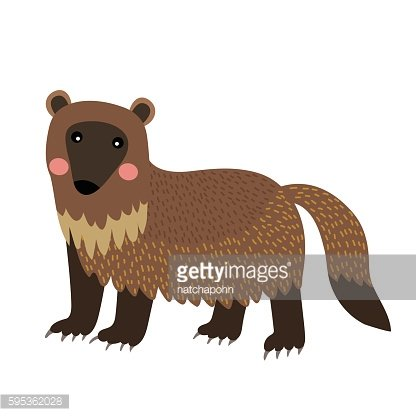 Wolverine animal cartoon character vector illustration.