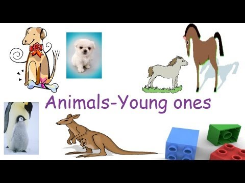 Animals and their young ones, Animals and their babies flash cards.