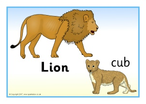 Animals and their Young Primary Teaching Resources.