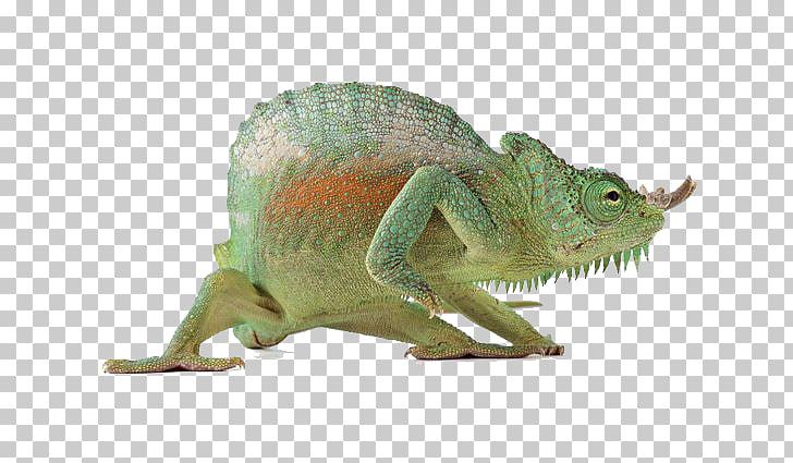 Lizard Reptile Chameleons, Animals chameleon PNG clipart.