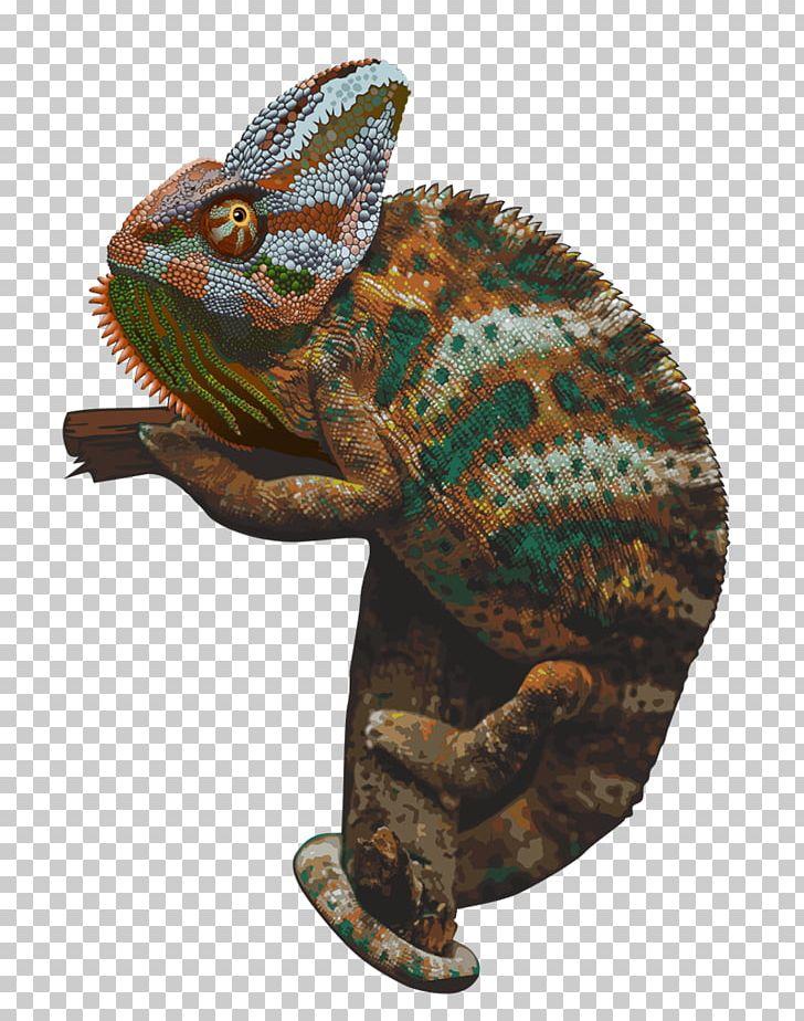 Chameleons PNG, Clipart, Animals, Chameleon, Chameleons.