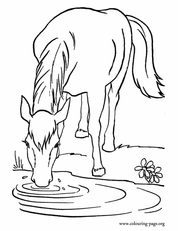 Horse Drinking Water Clipart.