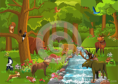 Animals Drinking Water Stock Images.