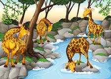 Animals Drinking Water Stock Illustrations.