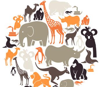 Kingdom Animalia: Classifying Animals.
