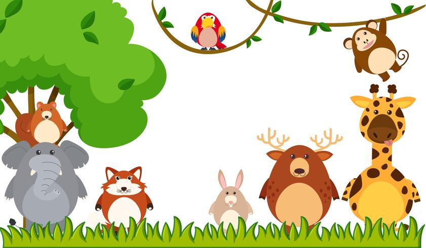 Different types of animals in the park.