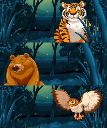 Wild animals in the woods at night.