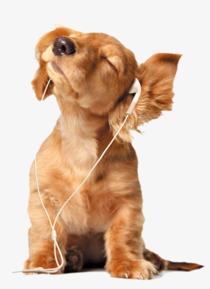 Listen To Music Dog PNG, Clipart, Animal, Animals, Brown.