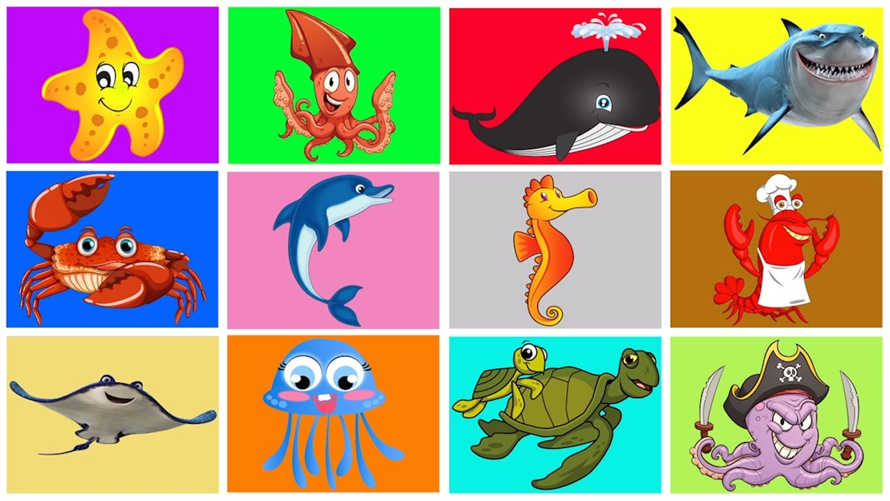 Animals That Live In Water Clipart.
