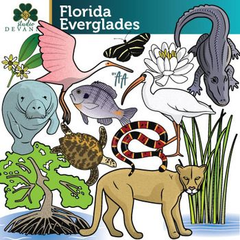 Florida Everglades / Wetland Clip Art.