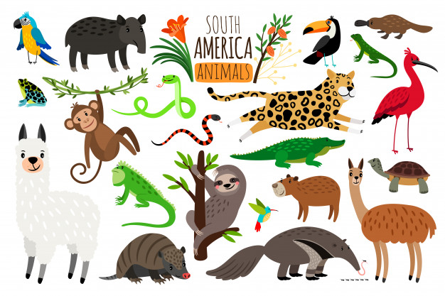 South america animals. Vector.