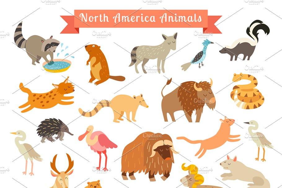 North America animals set.