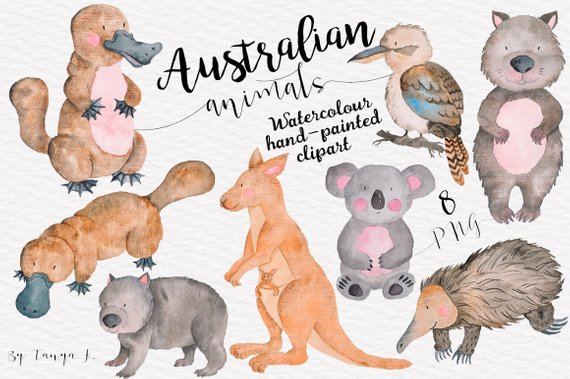Australian Animals Clipart, Watercolor Clipart, Cute Animals.