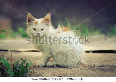 Sad Cat Stock Photos, Royalty.