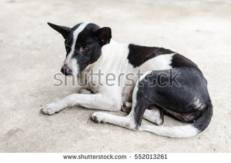 Two Happy Funny Cute Lovely Dogs Stock Photo 332789729.