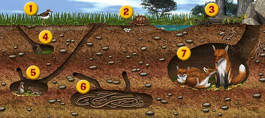 there is an image of an underground cross section.